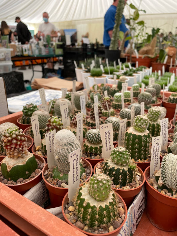 grafted cacti