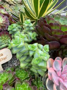Strong succulents
