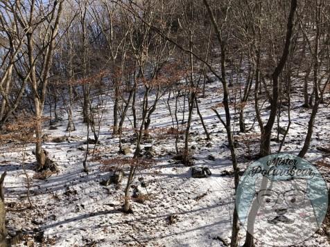 首爾自由行,首爾,自由行,韓國冬天,九曲瀑布,樹