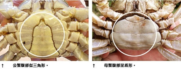 鷺梁津水產市場,公母蟹