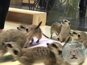 meerkat cafe, meerkat, koreacafe, seoul cafe