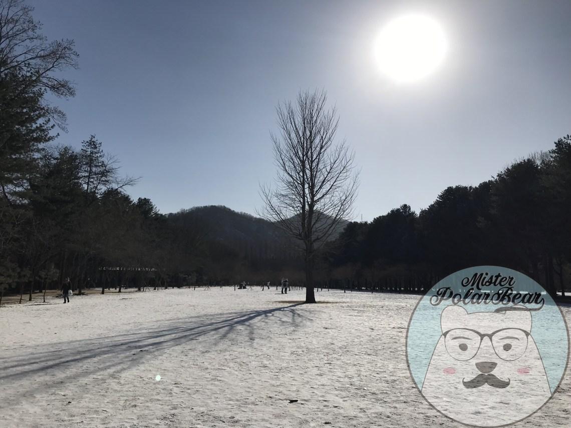 南怡島自由行,首爾自由行,冬季南怡島,南怡島自由行,南怡島杉樹