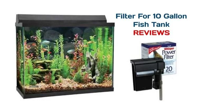 best 10 gallon fish