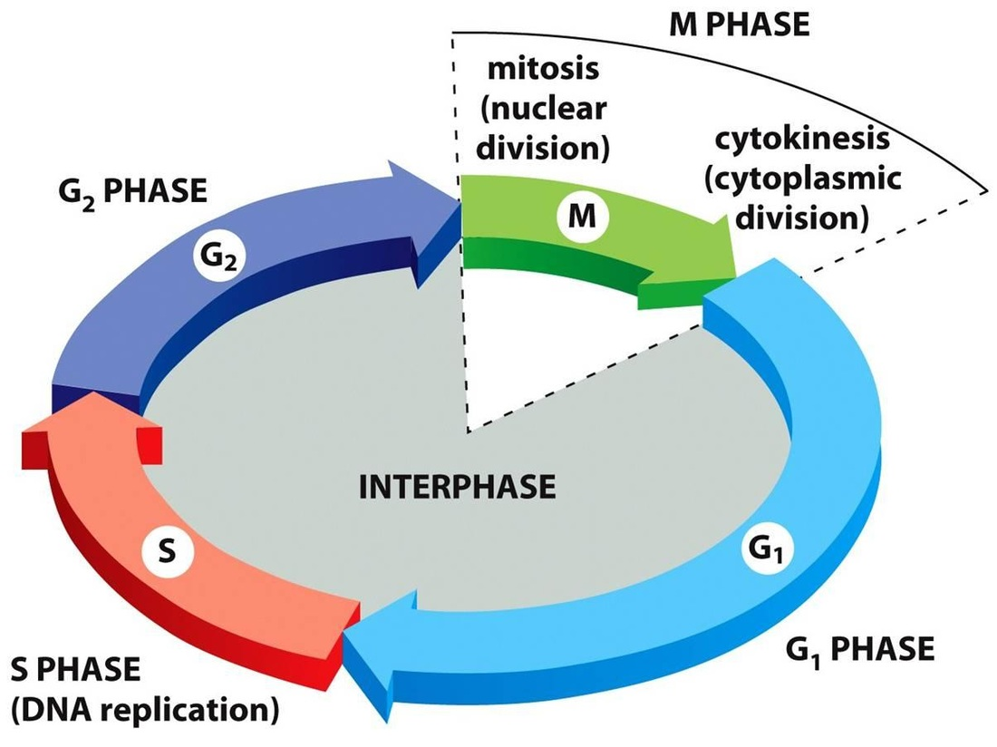 what is a network diagram and why it important allen bradley wiring diagrams unit 4 cell cycle