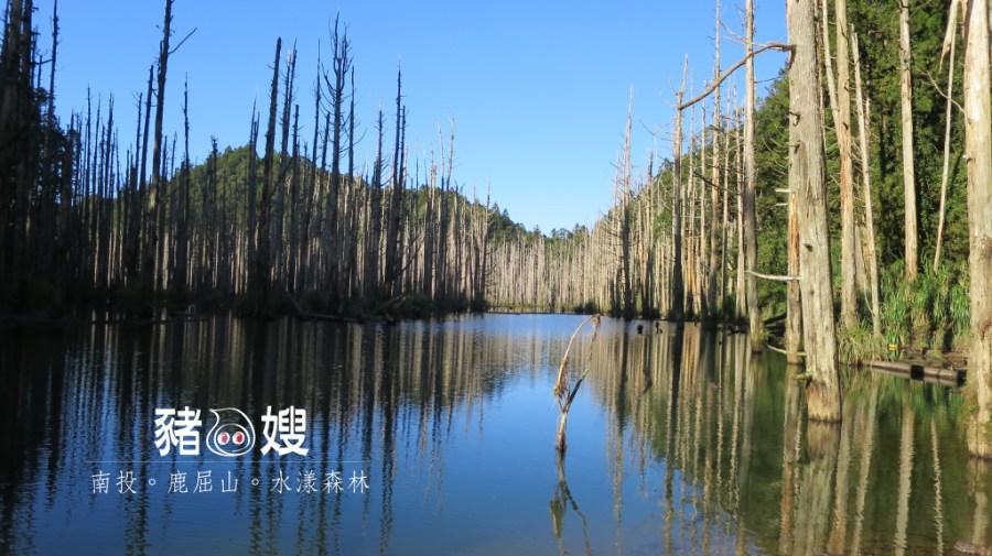 │山岳│南投水漾森林。鹿屈山2288M。兩天一夜緩緩爬