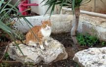 Tel Barak, Israel...