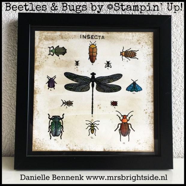 beetles_bugs