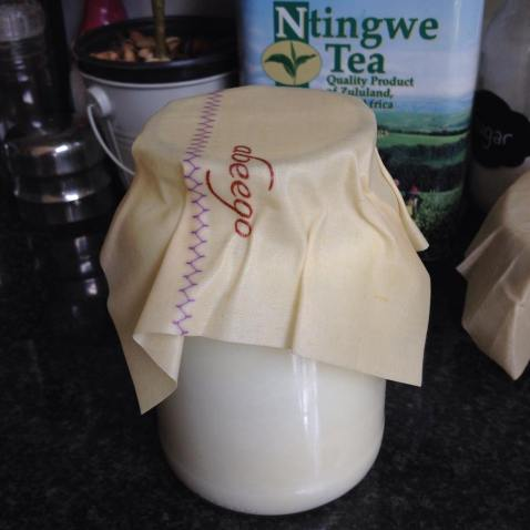 Small Abeego wrap as a lid on kefir