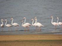 Flamboyance of flamingo!