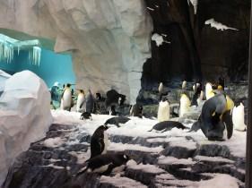 Penguins at Sea World