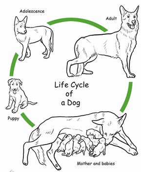 Animal Life Cycle Review. Test Monday, April 23rd, 2018