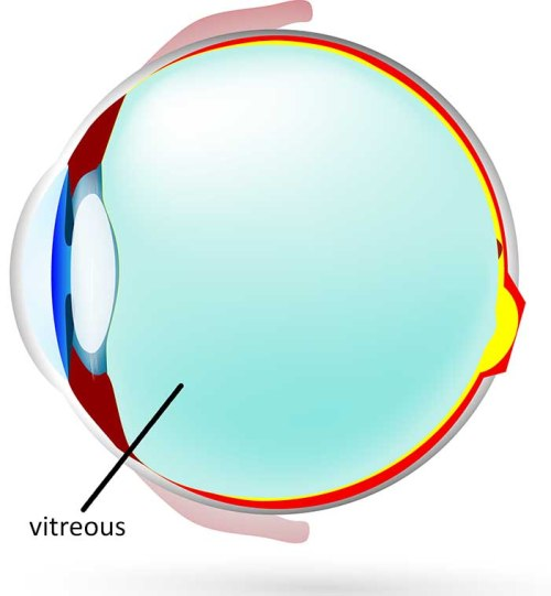 The vitreous (full name vitreous humour) is the jelly-like substance that fills the main cavity of the eye, behind the eye's natural lens