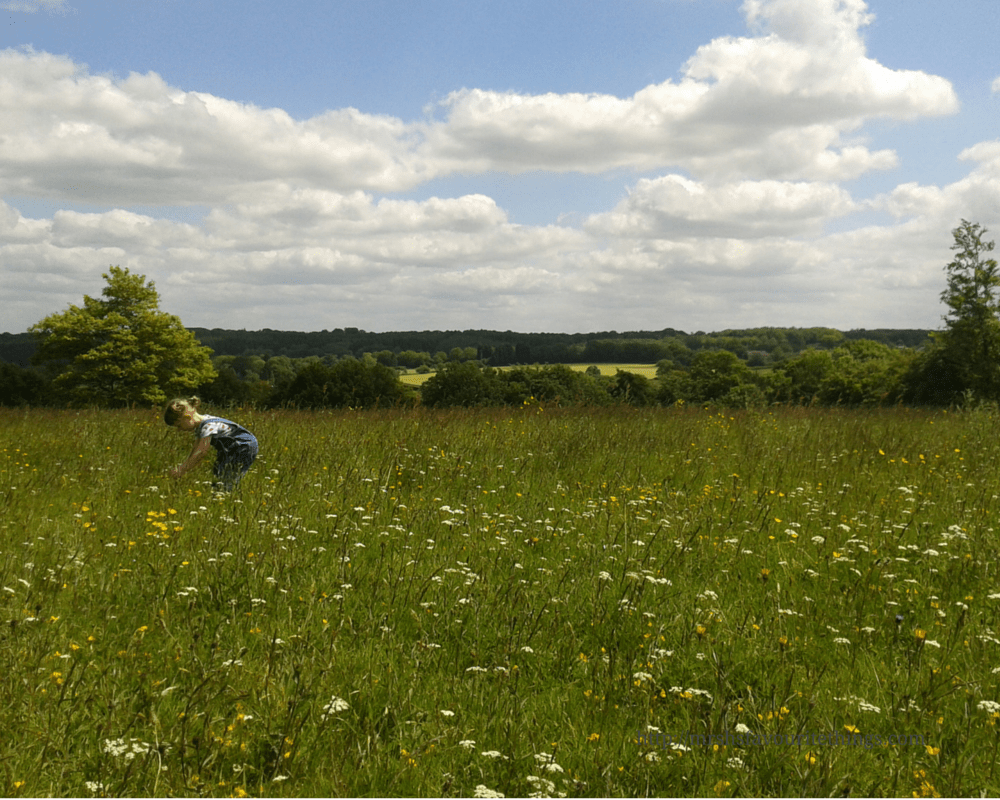 A little girl with bunches in her hair and wearing denim dungarees stands in a beautiful field picking wild flowers. Behind her is a big blue sky which is interspersed with some clouds. My Captured Moment - My five favourite photos from 2015 - Mrs H's favourite things