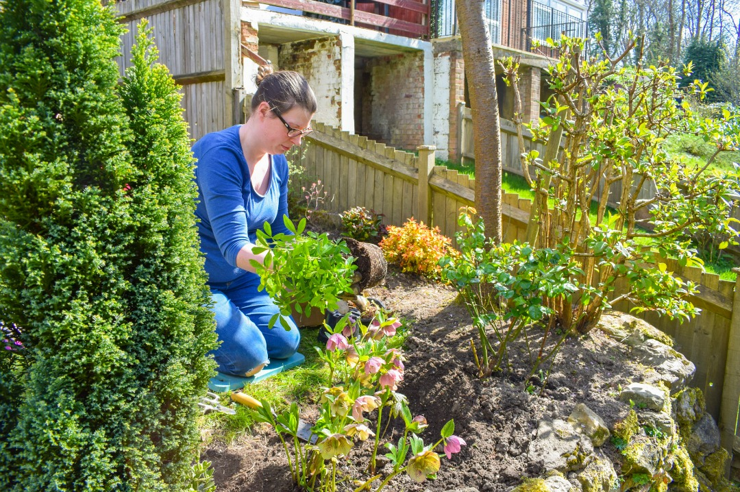 A photograph of a woman gardening - she is kneeling by a flower bed and planting one of the plants from the Spring Outdoor box from BloomBox Club Subscription service - Gardening myself happy with BloomBox Club - Mrs H's favourite things