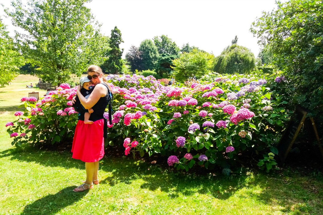 A photograph of a mother and baby standing in front of some beautiful pink hydrangeas at Emmett's Garden in Kent - the baby is being carried by his mum in a Pao Papoose 3 in 1 front and back baby carrier in midnight black from We Made Me - Pao Papoose by We Made Me - A Review of the 3 in 1 Front and Back Baby Carrier - Mrs H's favourite things