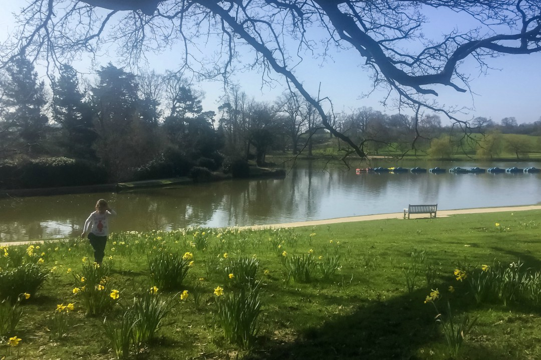 A little girl playing in a patch of daffodils at Dunorlan Park - Our Weekend Happy 12 - Park Run, Play Parks & A Visit To A Roman Villa - Mrs H's favourite things
