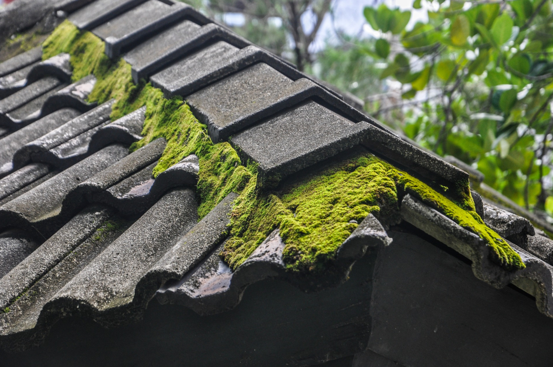 A photograph of a roof with moss on it - Essential Summer Home Care For Year-Round Protection - Mrs H's favourite things