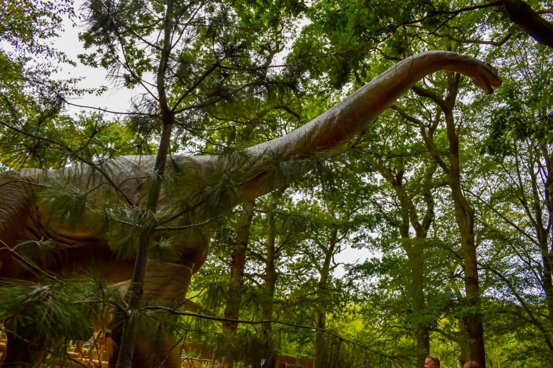 A photograph of an animatronic dinosaur from World of Dinosaurs at Paradise Wildlife Park - Paradise Wildlife Park - A Review - Mrs H's favourite things