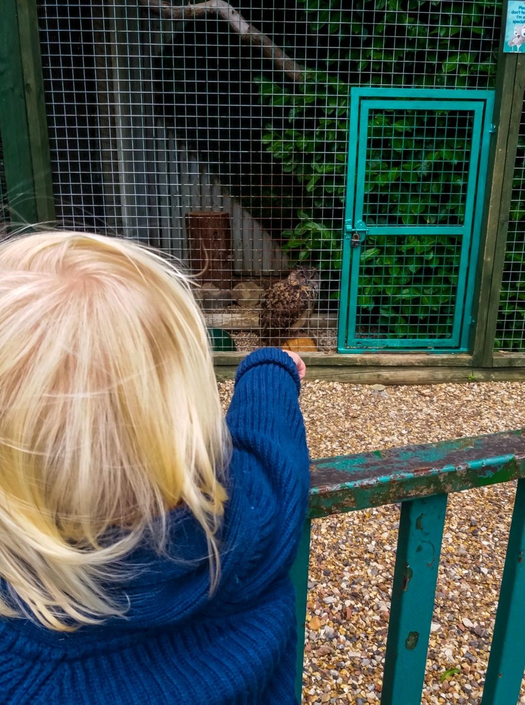 A photograph of a little boy looking at the birds at Paradise Wildlife Park - Paradise Wildlife Park - A Review - Mrs H's favourite things