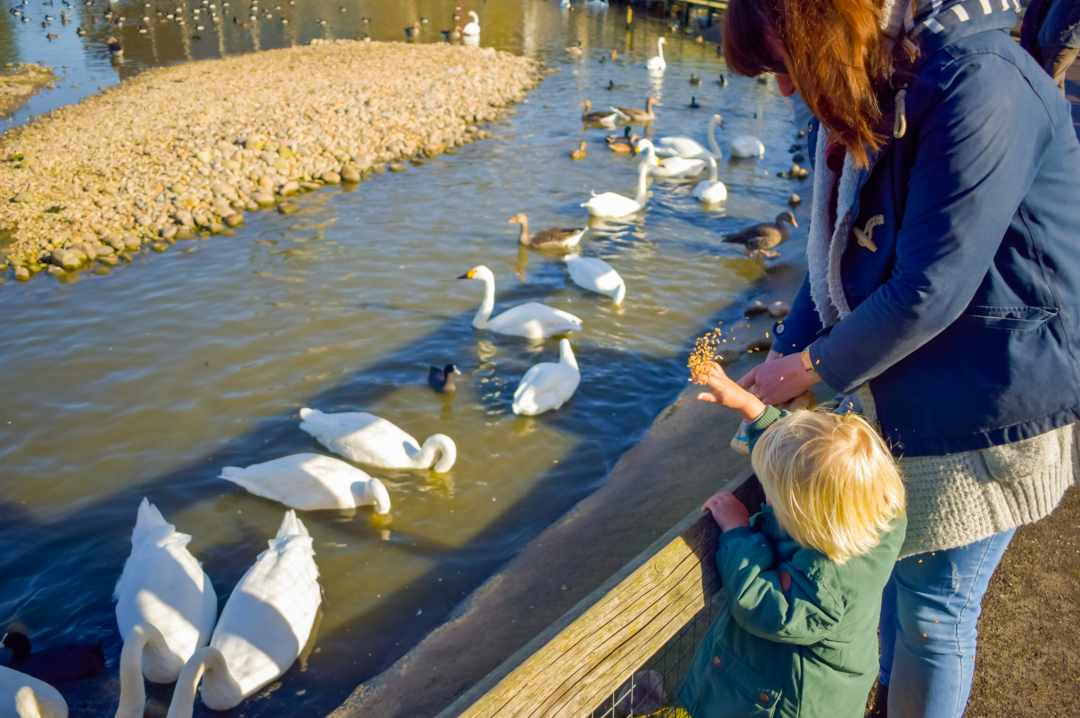 A photograph of a mum and her son feeding ducks at the Slimbridge Wetland Centre - Finding Happiness and Chasing Rainbows - October 2018 - Mrs H's favourite things