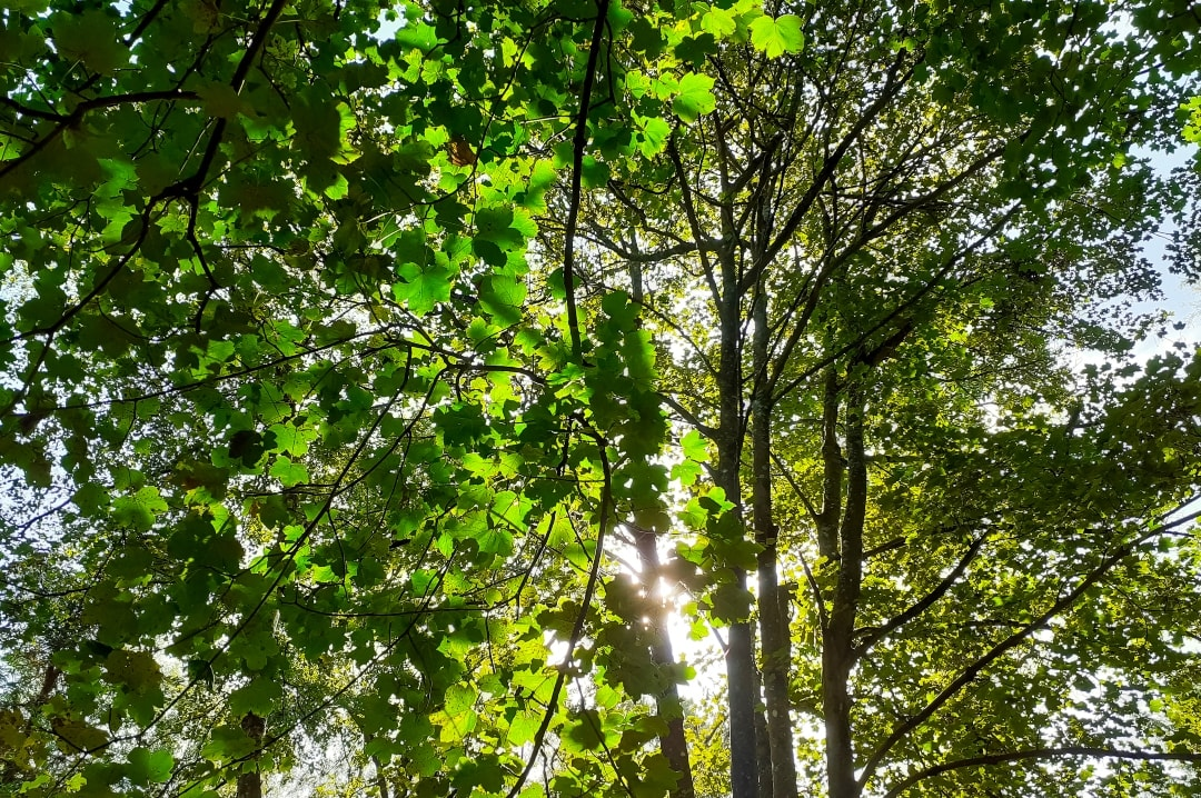 A photograph of the sunlight through the trees at Into The Trees festival 2019 - Into The Trees 2019 - An Idyllic Family Festival - Mrs H's favourite things
