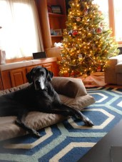 Penny and the Christmas tree.