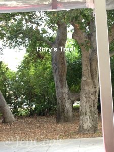 Rory's study tree in Stars Hollow.
