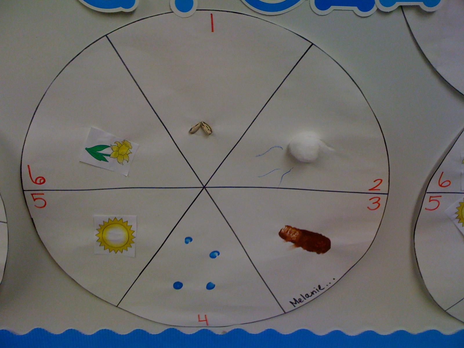 Parts Of A Plant And Plant Life Cycle Mrs Kilburn S Kiddos