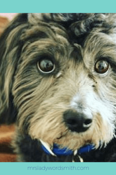 Pet Owners: Why You Should Leave Your Pets Home When Traveling or Shopping