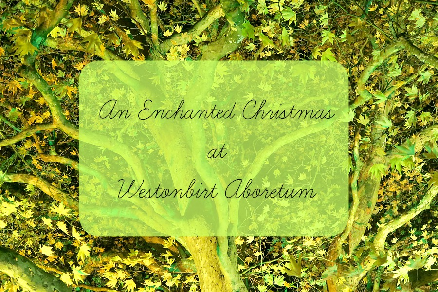 An Enchanted Christmas at Westonbirt Arboretum