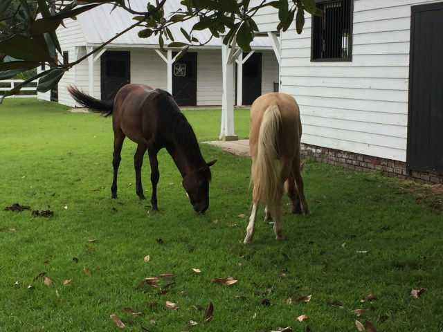 The stables at the Boone Hall Plantations, and some of their current occupants.