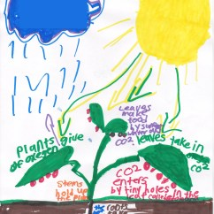 Photosynthesis Process Diagram For 5th Grade Honda Crx Wiring 4th Mrs Moskal