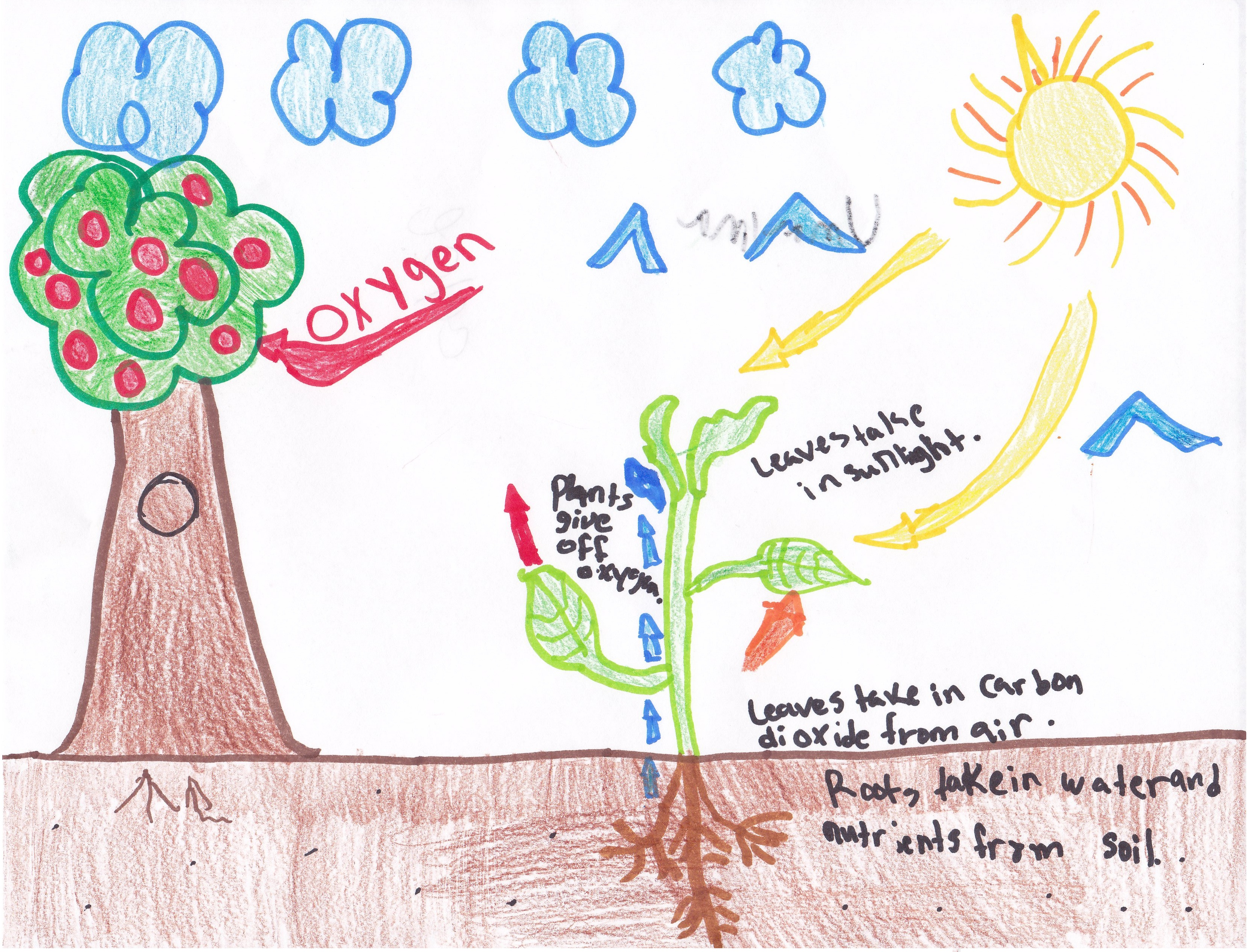 photosynthesis process diagram for 5th grade wiring led tail lights 4th mrs moskal