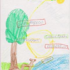 Flower Transpiration Diagram 2 Gang Way Lighting Wiring Fifth Grade Respiration And Mrs Moskal