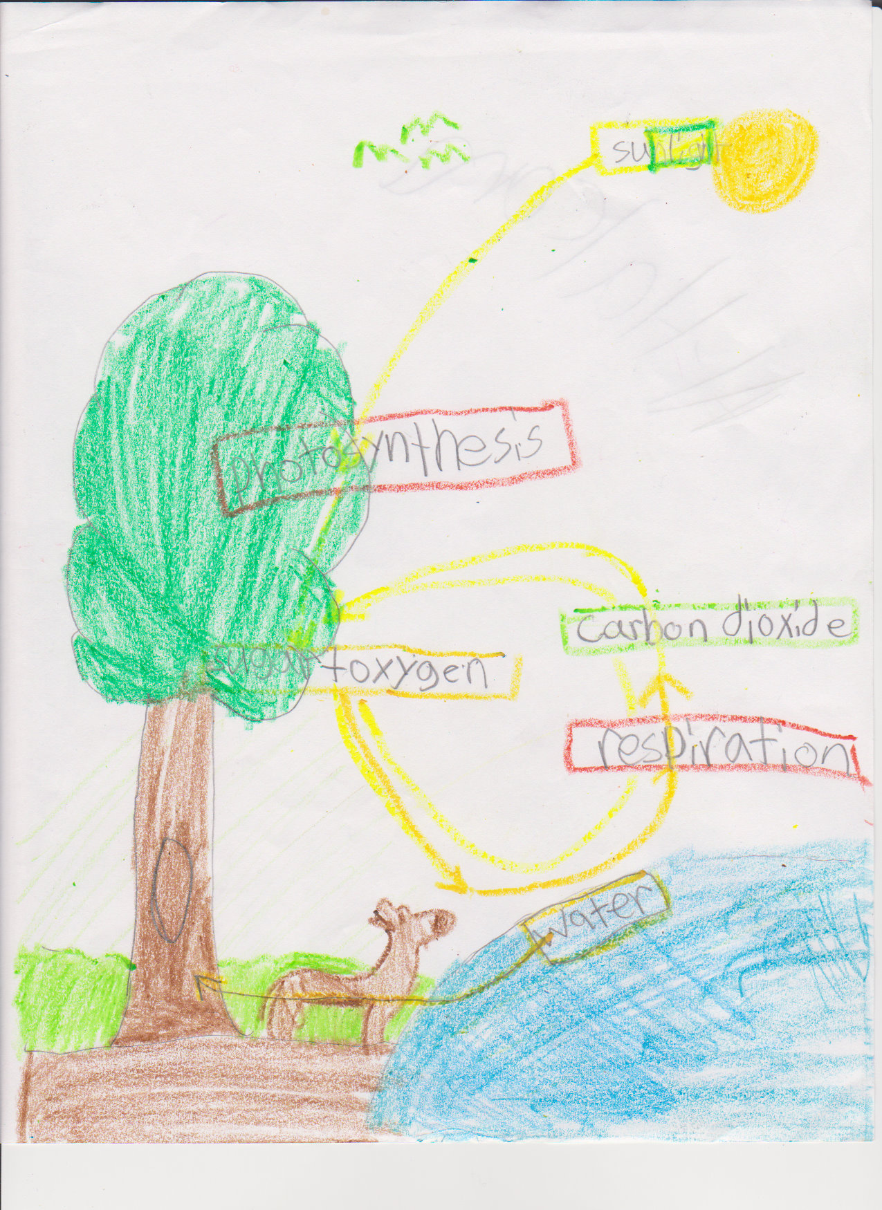 photosynthesis process diagram for 5th grade the treasure of lemon brown plot fifth respiration and transpiration mrs moskal