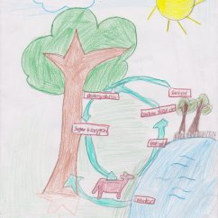 Photosynthesis Process Diagram For 5th Grade Outside Light Wiring Uk Fifth Respiration And Transpiration Mrs Moskal