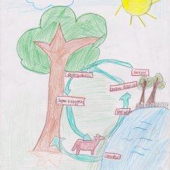 Flower Transpiration Diagram 2001 Dodge Neon Ignition Wiring Fifth Grade Respiration And Mrs Moskal