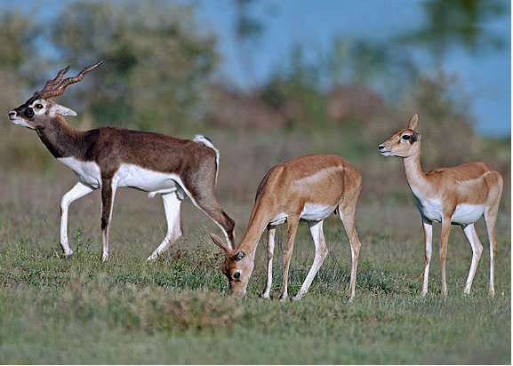 Tusker Trails, Bandhipur National Park, Karnataka