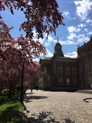 Osgoode Hall Blossoms 1