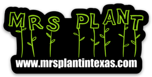 Mrs. Plant in Texas