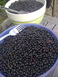 An image of a bowl of elderberries