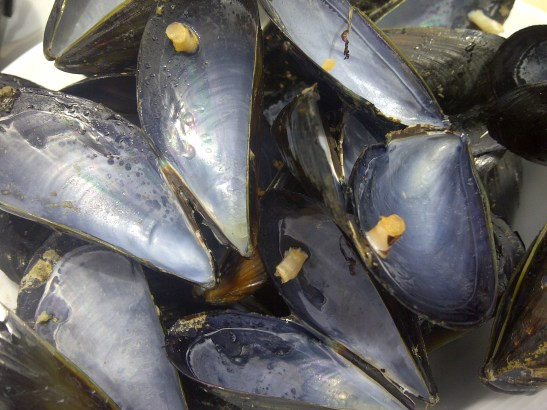 Image of mussel shells