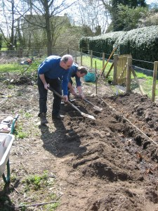 Image of people digging asparagus bed