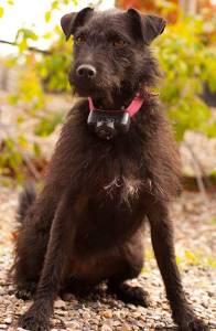 Image of Poppy the dog