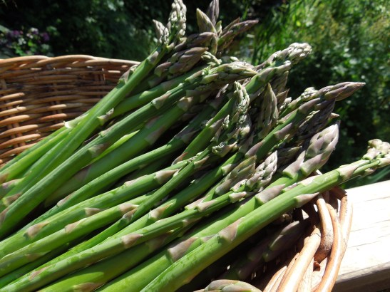 Image of a basket of asparagus spears