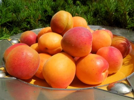 Image of bowlful of apricots
