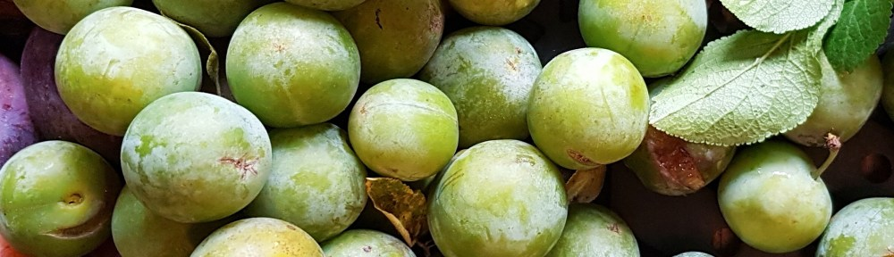 Image of greengages
