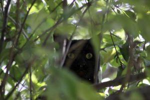 Black Cat Crosses My Path Pet Photography