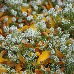 autumn in the garden T38A4992