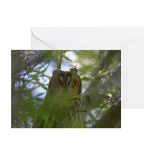 Big Eyed Owl Greeting Card